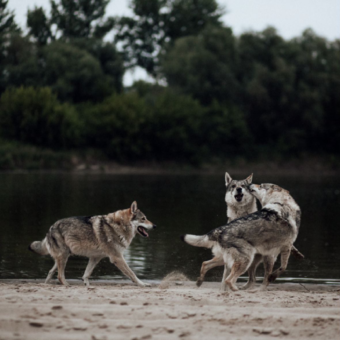 Gazetka W. KRUK: Katalog - Freedom Wolf 2021-02-17 page-18