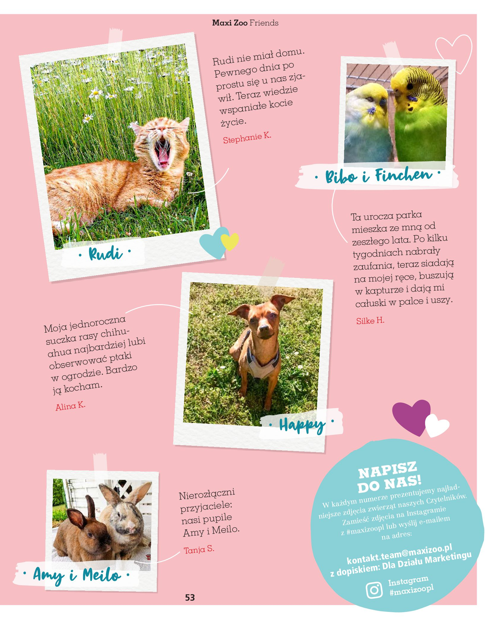 Gazetka Maxi Zoo: Gazetka Maxi Zoo - Friends 2021-05-18 page-53