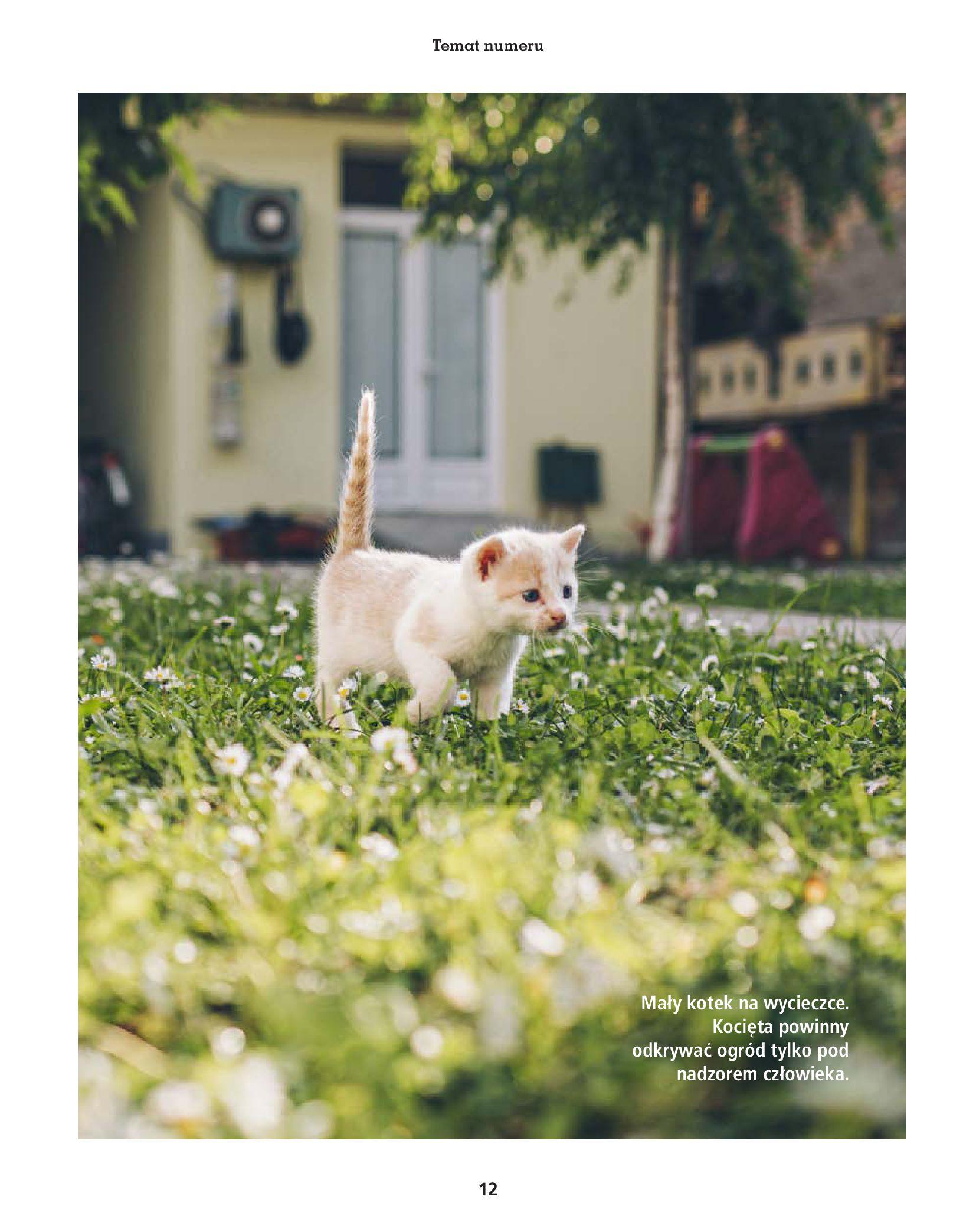 Gazetka Maxi Zoo: Gazetka Maxi Zoo - Friends 2021-05-18 page-12