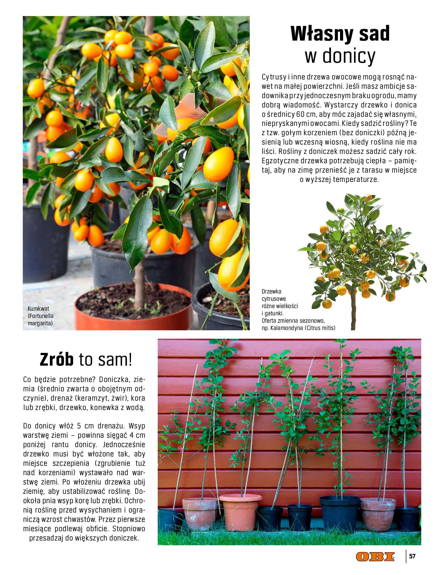 Gazetka OBI: Katalog OBI - Ogród, balkon, taras 2021-05-14 page-57