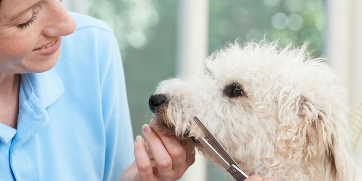 na kurs Groomer – Psi Fryzjer