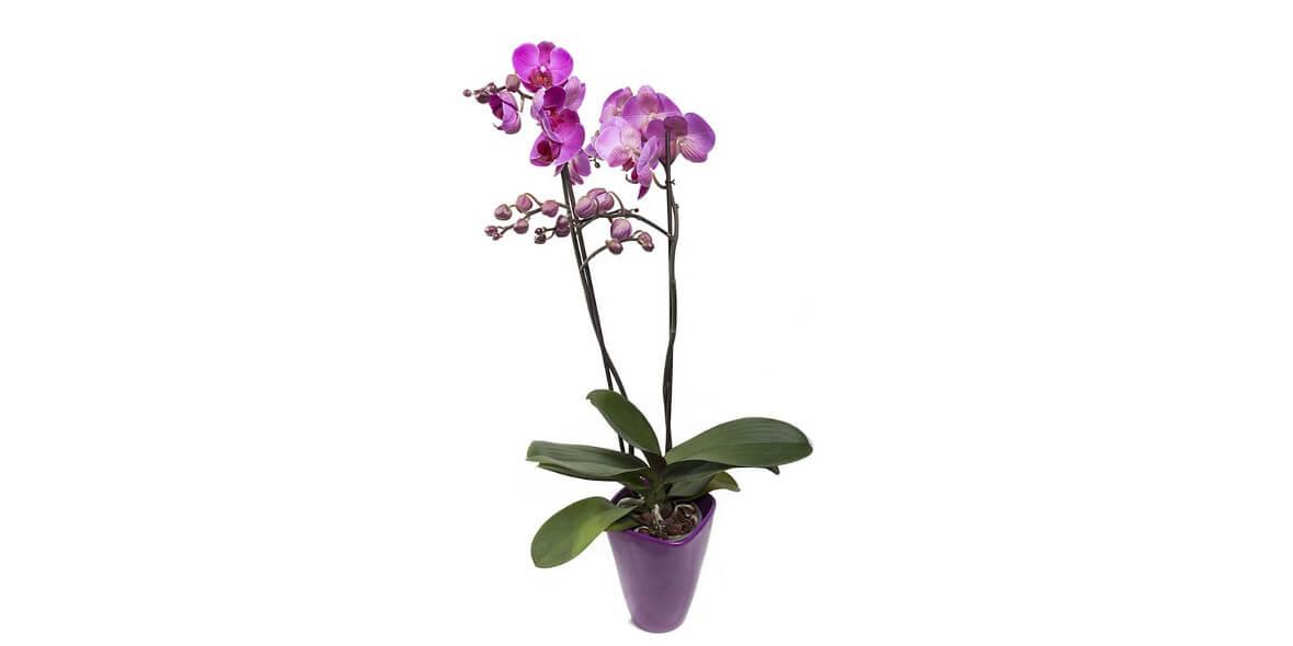 na storczyki doniczkowe i boxy kwiatowe