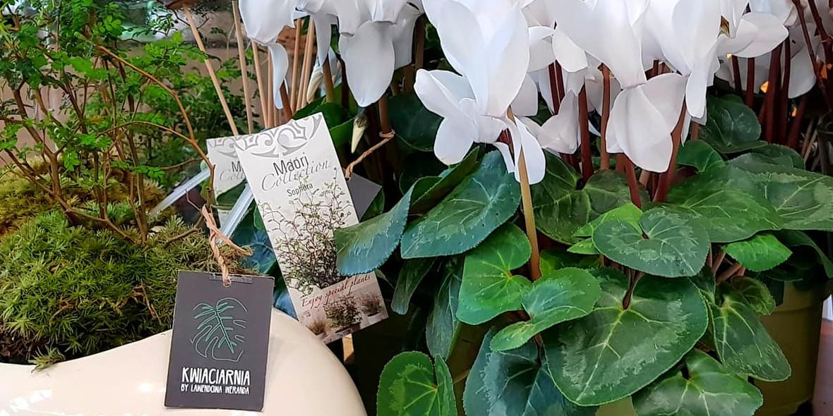 Kwiaciarnia by Lawendowa Weranda: -10% na rośliny doniczkowe w poniedziałek i wtorek 23.04.2019