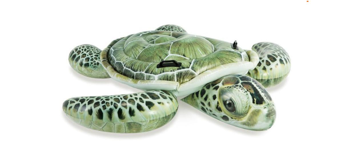 za dmuchanego żółwia na wodę