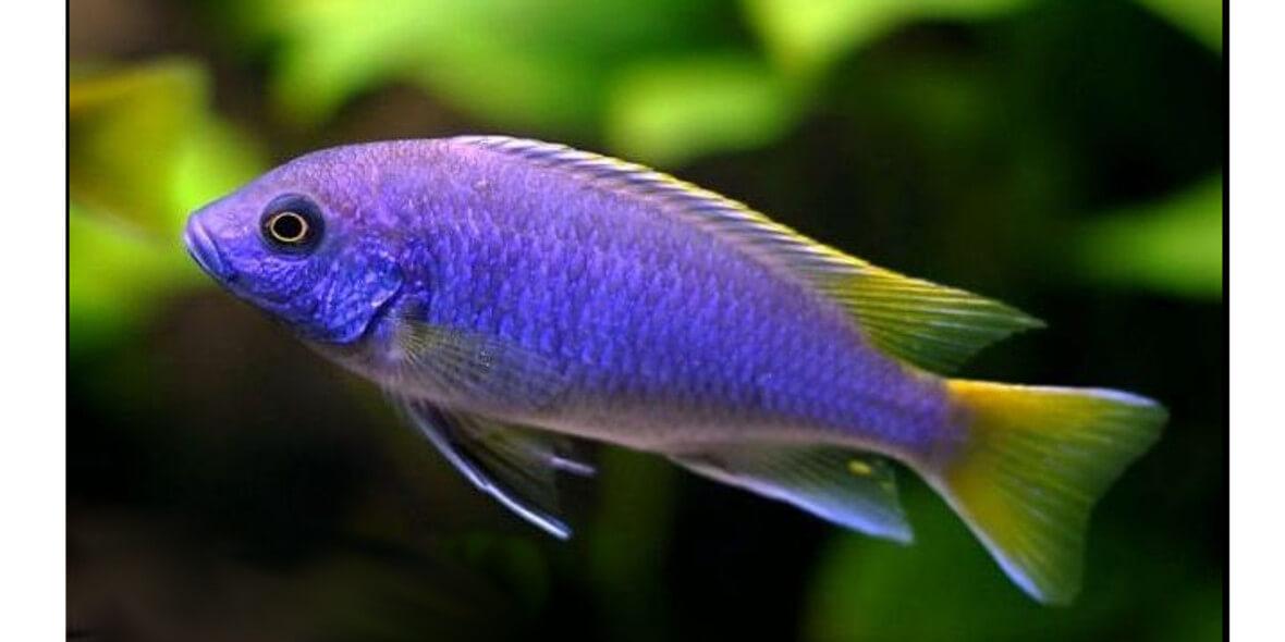 Rekin - Centrum Zoologiczne: -5% na wszystko w sklepie Zoologicznym