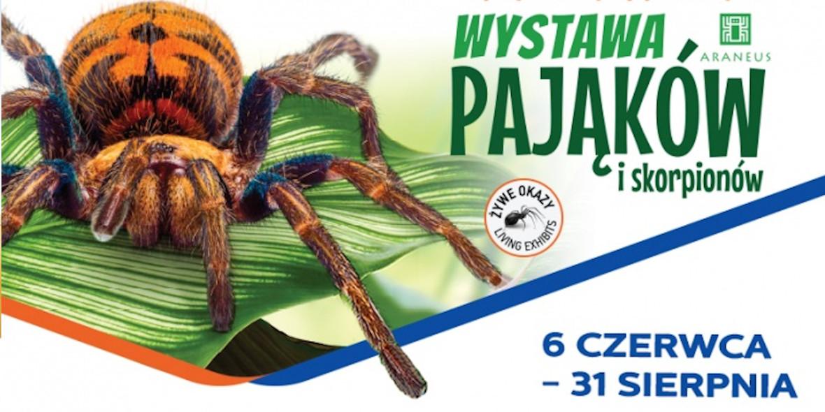 Wystawa pająków i skorpionów