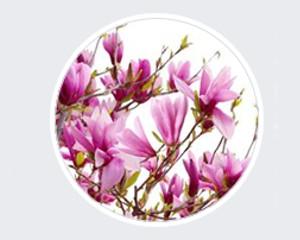Kwiaciarnia Magnolia